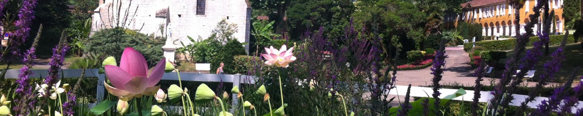 lotus-738